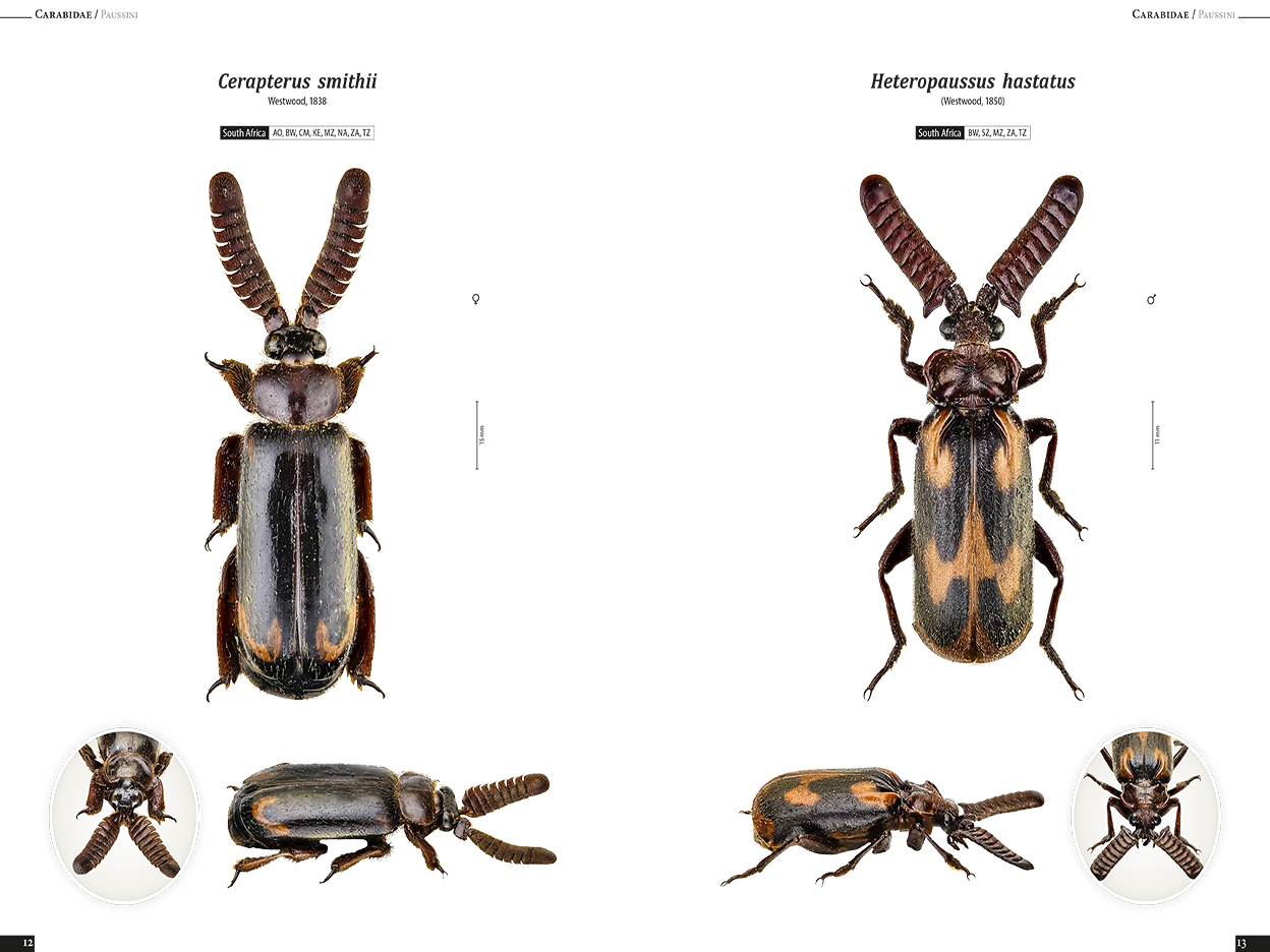 Ground Beetles of the Africa