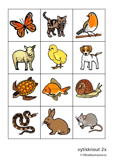 zvířata pexeso