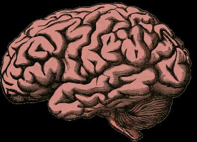 Jak zlepšit paměť na učení pro studenty? Vybíráme nejlepší léky, tabletky a doplňky výživy