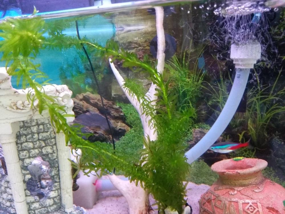 Preĺženie nasávania čerpadla v akváriu